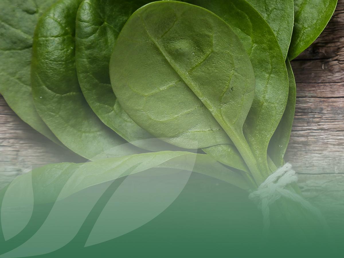 Spinacino o spinacio? Due verdure simili, ma diverse