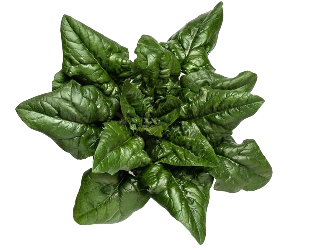 Baby Spinach or Spinach? Two similar but different vegetables