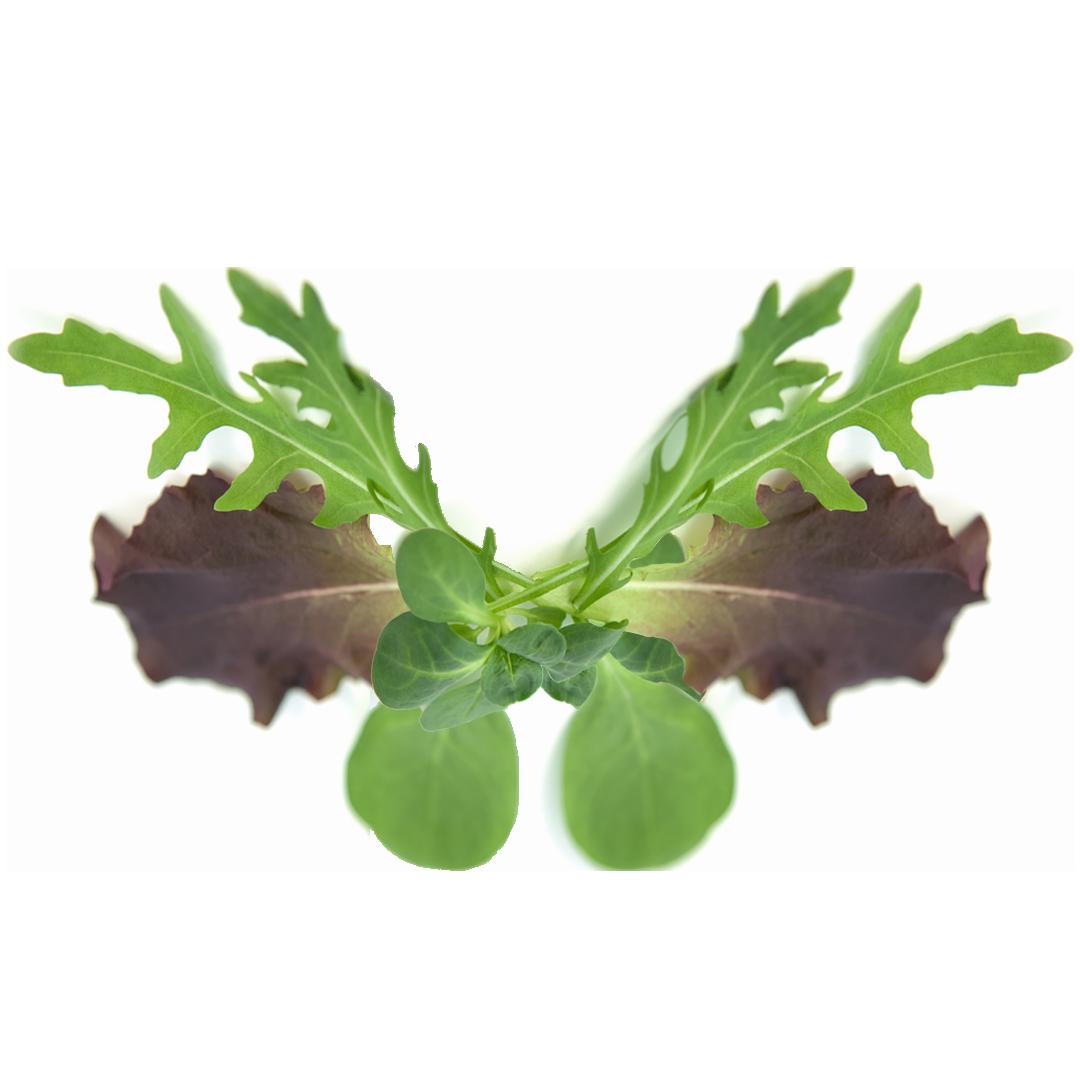 op isola verde_insalate orientali 1
