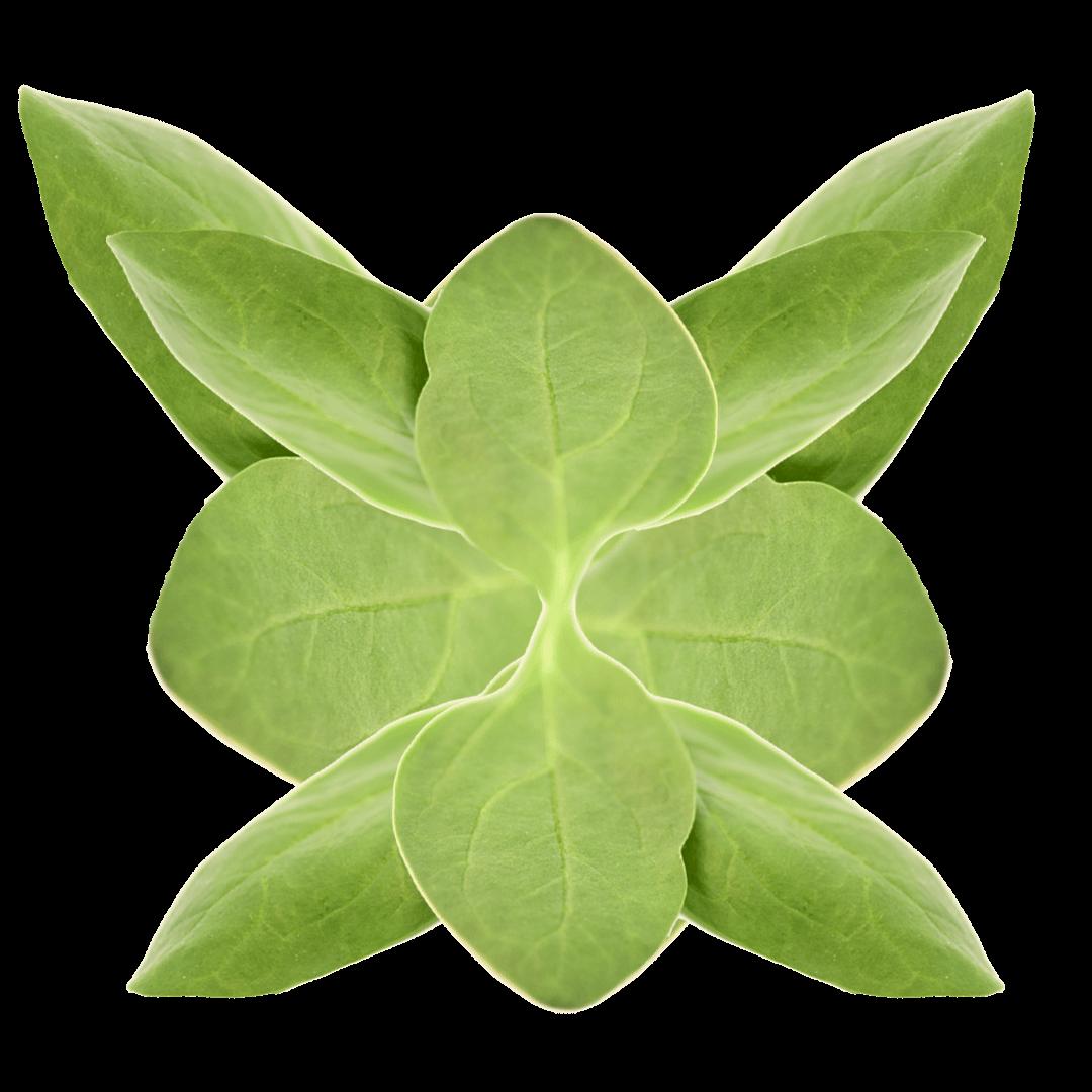 op isola verde_spinacino baby 1
