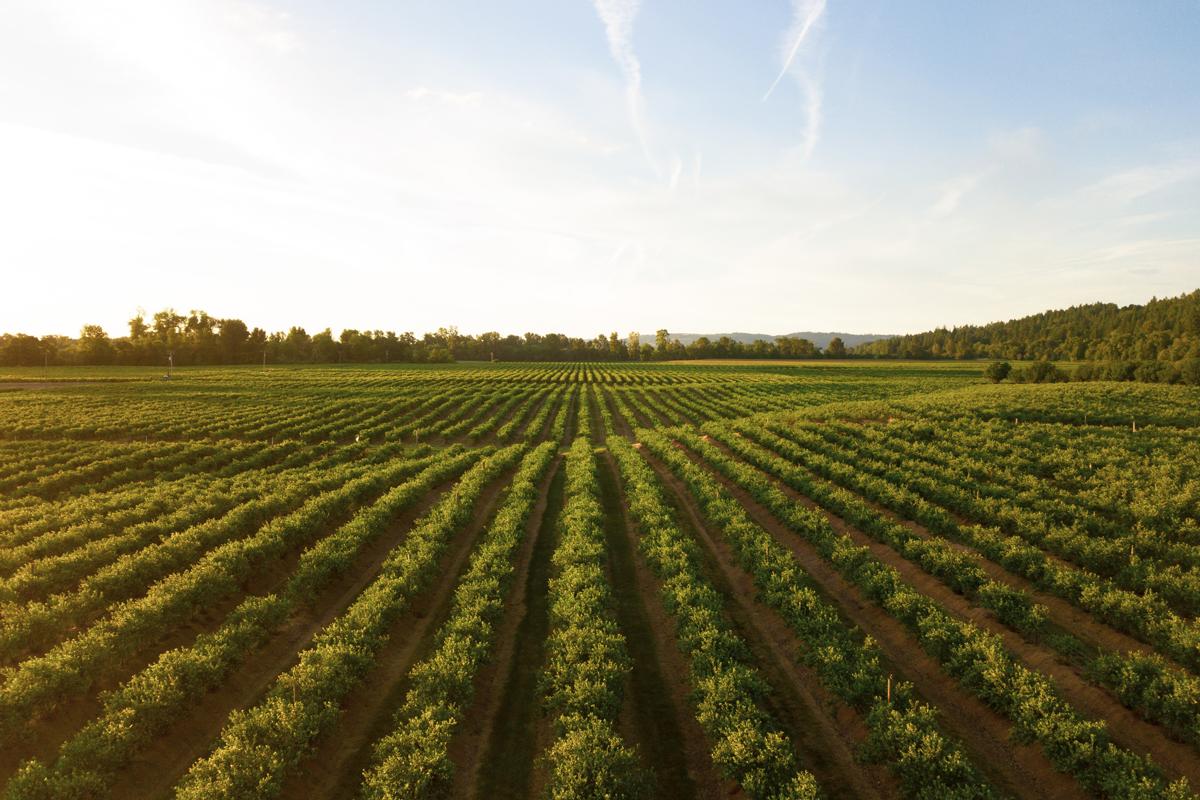 OP Isola verde L'agricoltura è un settore ancora in crescita