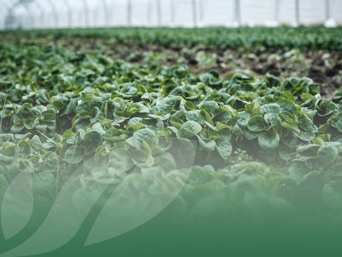 L'agricoltura è un settore ancora in crescita