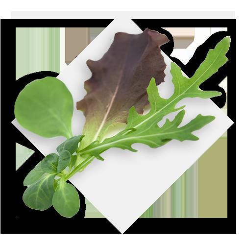 Baby leaf mix