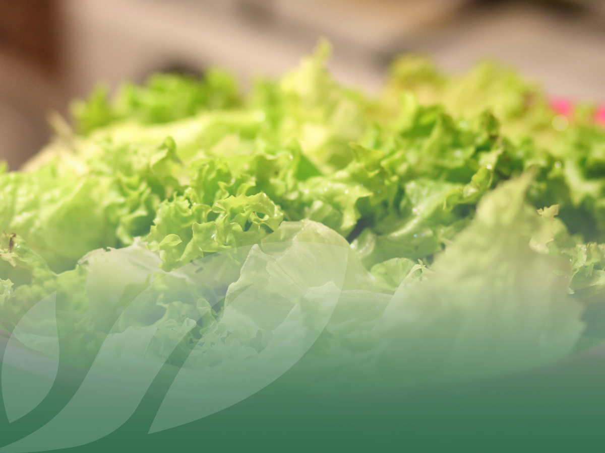 3 packaging solutions for our first range baby leaf salads